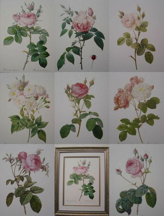 ルドゥテのバラの絵